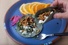 Blue corn waxworm tacos