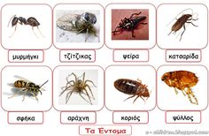 Diy And Crafts, Insects, Animals, Spring, Montessori, Activities, School, Google, Animales