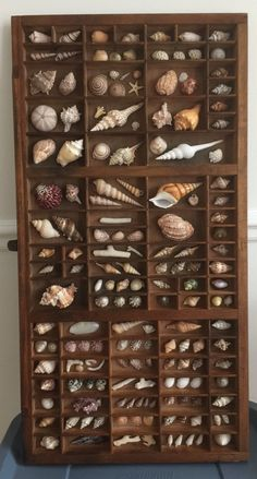 Already have the printer's box and shell! - debbie case - shell crafts Already have the printer's box and shell! Seashell Art, Seashell Crafts, Beach Crafts, Diy And Crafts, Arts And Crafts, Seashell Display, Display Sea Shells, Seashell Projects, Shell Collection