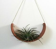 hanging cradle for air plants Hanging Air Plants, Hanging Pots, Indoor Plants, Air Plants Care, Plant Care, Hanging Cradle, Office Plants, House Plants, Projects To Try