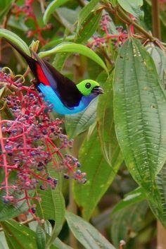imagenes+de+aves+mas+lindas+del+mundo                                                                                                                                                                                 Más