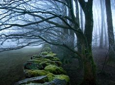 Where could this be?  What lies on either side of the wall?  Moss Covered Stone Wall and Trees in Dense Fog by Tommy Martin.