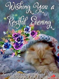 Praying you have a restful evening, sweet dreams and our loving Father blesses you. Good Night Cat, Good Night Beautiful, Cute Good Night, Good Night Sweet Dreams, Good Night Image, Goodnight And Sweet Dreams, Good Night Sleep Tight, Beautiful Babies, Good Evening Greetings
