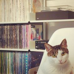 Records & cats.