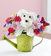 1-800-flowers a-dog-able collection