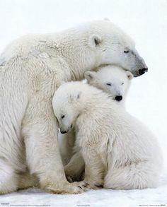 Mum's Love