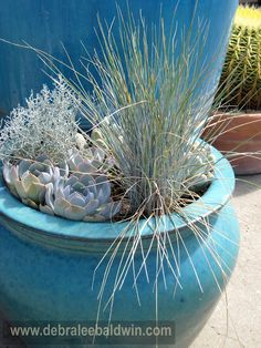 blue color themed succulents and grass.