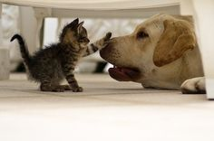 Just a kitten love and a good doggie- hello sibling!