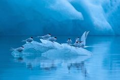 Winner in birds category: Icy resting place by Bernd Nill.  Photograph: Bernd Nill/GDT Nature Photographer of the Year 2013