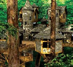 """""""Alnwick Garden Treehouse is the world's largest, all-wood treehouse. It is six…"""