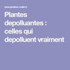 Plantes depolluantes : celles qui depolluent vraiment