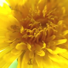 Dandelions can be pretty
