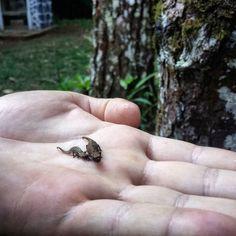 La plus petite espèce de caméléon au monde #voyage #travel #madagascar #nature #cute by chris_voyage #travel