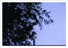 Sagano Bamboo #006 : Art Photography Poster (Kyoto Nara of The Zen) (Japanese Edition) by kitazawa-office,  #Kyoto #Art #Japan
