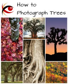 Great Subjects: How to Photograph Trees - Each tree is as unique as every person, and can be used to create an equally unique photograph. http://annemckinnell.com #photography #tutorial