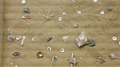 Learn to identify a variety of local shells at the Children's Museum of South Carolina #MYRDreamVacation
