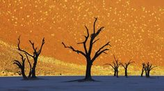 The camel thorn trees during sunrise at Deadvlei, Naimbia can pass for a painting.
