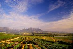 This delightful drive winds its way to the heart of the Cape Winelands, through superb mountain ranges, vineyards and Cape Dutch homesteads Head off to the wine country via the to the heart of South Africa's wine industry, Stellenbosch, boast Champagne, Wine Safari, Table Mountain, Berg, Africa Travel, Wine Country, Cape Town, Luxury Travel, Wonderful Places