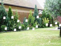 Garden Design Diy Landscaping Plants Ideas - New ideas Privacy Landscaping, Front Yard Landscaping, Arborvitae Landscaping, Back Gardens, Outdoor Gardens, Evergreen Garden, Evergreen Trees, Gras, Garden Planning