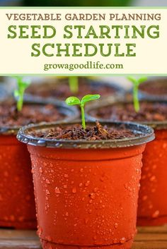 Growing a vegetable garden from seed this year Stay organized by developing a seed-starting and planting schedule so you know when to sow seeds and transplant seedlings to the garden springgarden growfood vegetablegarden Vegetable Garden Planning, Vegetable Garden Design, Garden Seeds, Garden Plants, Garden Shrubs, Gardening From Seeds, Plants From Seeds, When To Plant Garden, Organic Gardening