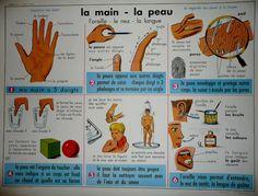 Affiche : La main