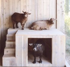A New Adventure at Patina Farm: Sheep and a New Chicken Coop. Mini Goats, Cute Goats, Baby Goats, Goat Playground, Goat Toys, Goat Shelter, Goat Pen, Patina Farm, Goat Care