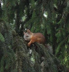 Sleeping baby squirrel