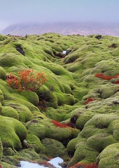 Once you look over the mossy valleys and lava fields, you could be looking over elf gardens in Iceland, like here in Vik, South Iceland. If you meet an Elf, please say hi and send our best to the fellow.