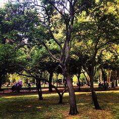 Boschetti di alberi, Parco della Montagnola Bologna