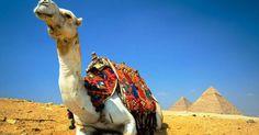 Disfruta de una Excursión maravillosa en Cairo desde El Puerto de Alejandría para explorar la historia de las Pirámides,Sakkara y Memphis y vive la aventura ..