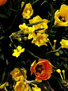 Flowers everywhere ❤️