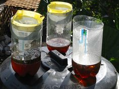 How to Make a Wasp Trap in 6 Steps