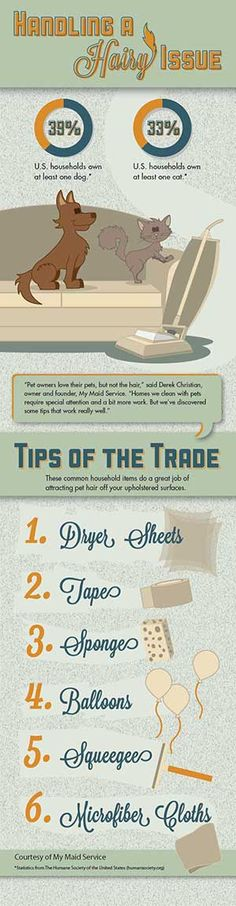 Cleaning Business Today | Infographic - Pet Hair Removal: Tips of the Trade