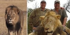 PLEASE SIGN THIS PETITION to Charge and extradite American wildlife poacher Walter J. Palmer to Zimbabwe