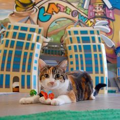 Pin for Later: 15 Ridiculously Awesome Animal Cafes That You Can Visit Cat Town Cafe and Adoption Center, Oakland, CA