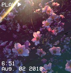 M O O N V E I N S 1 0 1 #vhs #aesthetic #2018 #august #time #play #pink #yellow #flower #flowers #flora #iphonepics