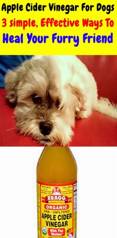 You can use apple cider vinegar for dogs in different ways. Here are 3 simple ways apple cider vinegar can help your dog. enjoy The benefits of apple cider vinegar for dogs. Dog Flea Remedies, Itching Remedies, Home Remedies For Fleas, Flea Remedy For Dogs, Itchy Dog Remedies, Dog Ear Infection Treatment, Ear Infection Home Remedies, Dogs Ears Infection, Dog Ear Cleaner Homemade