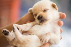 New born puppy by Pushish Images on @creativemarket