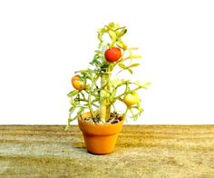 A little tomato plant has already sprouted tiny vegetables for your Fairy Garden, Miniature Dollhouse or Terrarium. The miniature clay flower pot