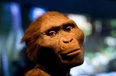 The Death of #Lucy: Has a 3.2 Million-Year-Old #Mystery Finally Been Solved?