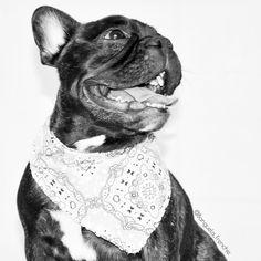 Fui desafiada a postar uma foto em P&B pela minha amiga @_zara_3108 e desafio alguns amigos marcado na foto a fazerem o mesmo quero ser modelo da @mrdogdesign ________________________________________ #9gag #concursomrdog #frenchiegram #petmodel #instagramdogs #bulldogfrances#ilovefrenchies #instapup #dogmodel #frenchielife #dogsofinstaworld #igdogs #aumigosdoig #bullyinstafeature #bullyinstagram #tbt #thefrenchiepost #frenchiephotos #ig_bules #bullypics #batdogs #doglovers #pawpack…