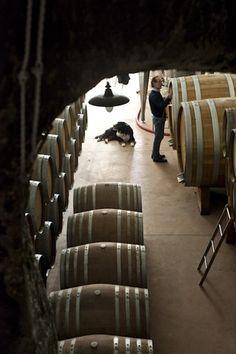 246 Meilleures Images Du Tableau Le Vin De Treille