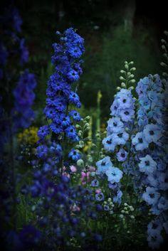 Pieni puutarha: jaloritarinkannukset