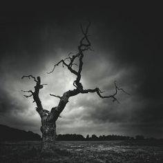 The Last Tree, landscape photography by Marcin Stawiarz.