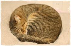 タマゴからたまちぃ - http://iyaiyahajimeru.jp/cat/archives/64993
