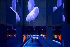 ◇Sumida Aquarium -  #Japan #Tokyo #design #Interior #aquarium #ShuwaTei