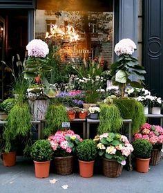 Gorgeous shop front