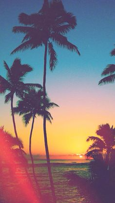 Plan tree sunset wallpaper