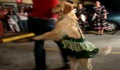 Talento canino: veja os melhores cães dançarinos da Internet!