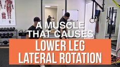 A muscle that causes lower leg lateral rotation
